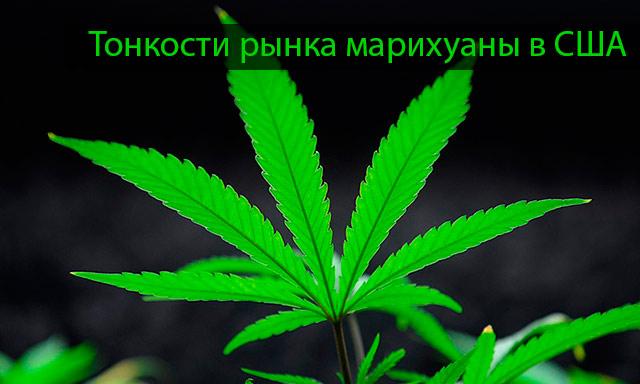 Конопля и марихуана отличия легкие от марихуаны фото