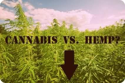 Конопля и марихуана разница конопля сроки за хранение